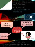 PERIODONTO DE INSERCION
