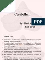 Cerebellum Seminar