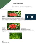 plantas ornamentales2