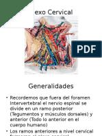 18. Plexo Cervical