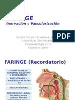 Clase Faringe Inervación y Vascularización