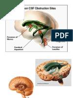ventriculos diencefallo
