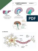 Ciencias Naturales Cuarto Basico Cerebro y Emociones 1