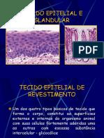 Tecido Epitelial e Glandular 2013.2