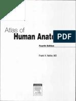 Atlas Human Anatomy Ciba Netter