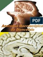Diencéfalo e Hipotálamo