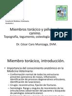 02-2014-CC-Miembros Toracico y Pelvico de Canino.