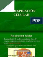 Respiracion Celularrr
