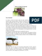 Plantas en Peligro de extinción.docx