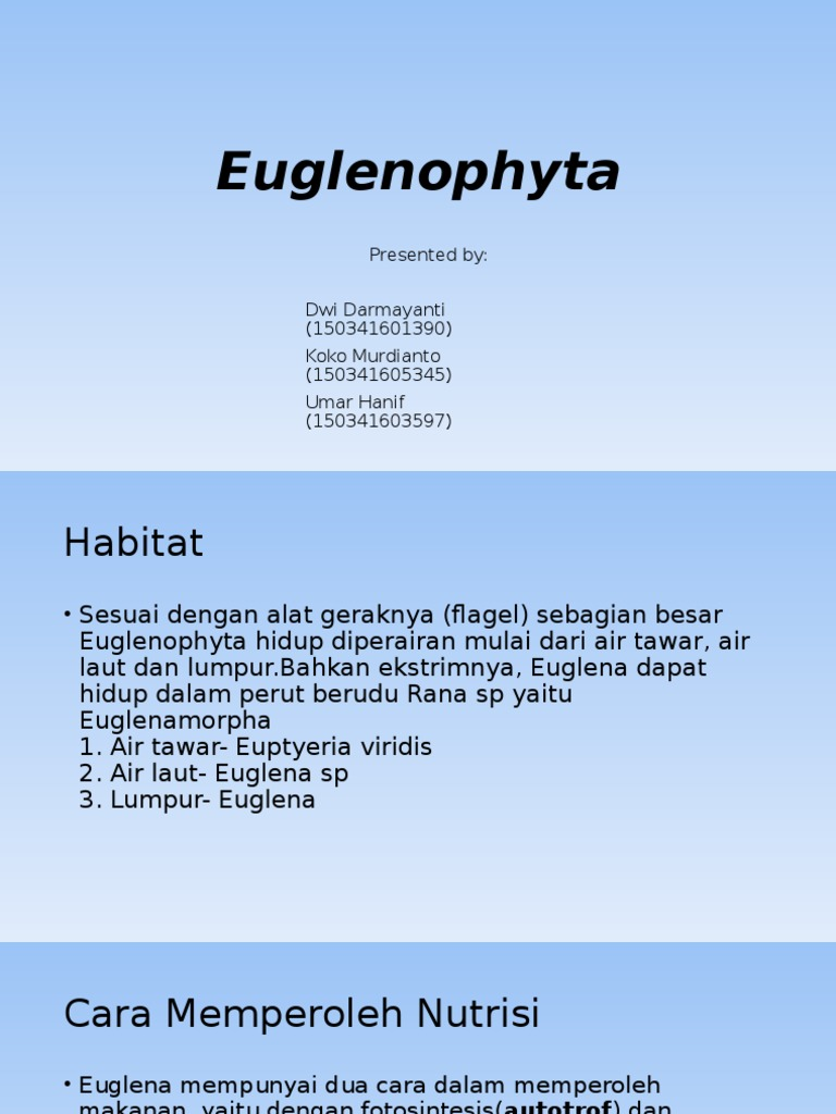 Euglenophyta.ppt | Anatomical Terms Of Location | Cell (Biology)