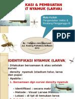 Identifikasi & Preparat Nyamuk (Larva) DIV