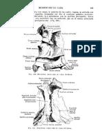 Tratado de Anatomia Humana Quiroz Tomo I_115