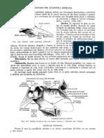 Tratado de Anatomia Humana Quiroz Tomo I_118
