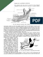 Tratado de Anatomia Humana Quiroz Tomo I_120