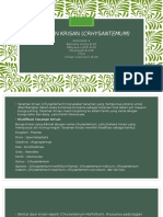 Tanaman Krisan (Crhysantemum)