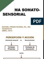 9- Sistema SomatoSensorial