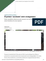 El Primer 'Asesinato' Entre Orangutanes _ Ciencia _ EL PAÍS