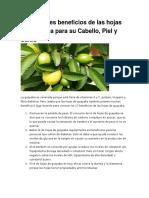 17 Increíbles Beneficios de Las Hojas de Guayaba Para Su Cabello
