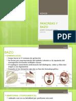 Pancreas y Bazo