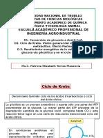 Clase 5. Ciclo de Krebs o Ciclo del ác. cítrico.ppt