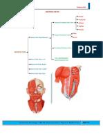 Sistem Otot Str