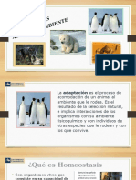Adaptaciones Animales
