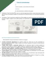 Clases de Articulaciones.docx