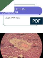 Aula Prática de Tecido Glandular2016