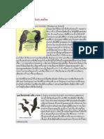 Thai Hornbill