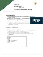 2º - Guía de estudio mitosis Pauta