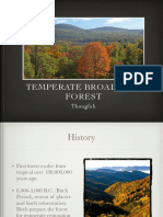 temperate forest-3