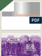 Histologi Faring