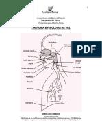 Anatomia e Fisiologia Da Voz