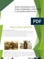 Caballo Criollo Argentino
