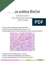 Revisão Prática BioCel