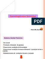 Med 15 Gametogenese Feminina I