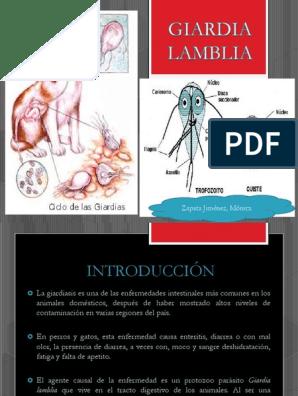 giardia lamblia en perros pdf