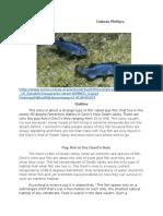 pup fish in death valley