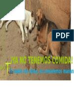Falta Comida - Adopta Trujillo