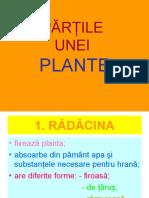 Partile Unei Plante