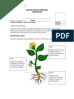 guadepolinizacion-130625221022-phpapp02.docx