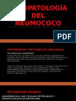 Fisiopatología Del Neumococo