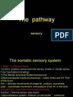 6sensory Pathway