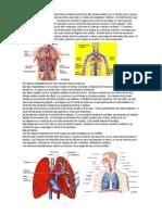 Sistema o aparato circulatorio.docx