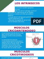 Musculos laringe