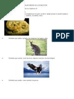 Clasificación de Los Animales Según Su LocomociónClasificación de Los Animales Según Su LocomociónClasificación de Los Animales Según Su LocomociónClasificación de Los Animales Según Su Locomoción