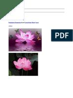 ramkissoon ramnarine shared lotus divine flower2