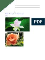 ramkissoon ramnarine shared lotus divine flower3