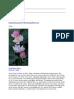 ramkissoon ramnarine shared lotus divine flower5