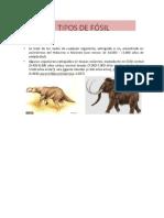 Tipos de Fósiles